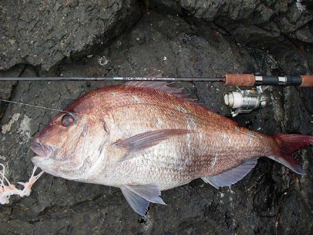 2008/3 真鯛8.15kg